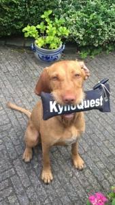 Doeka met KynoQuest dummy